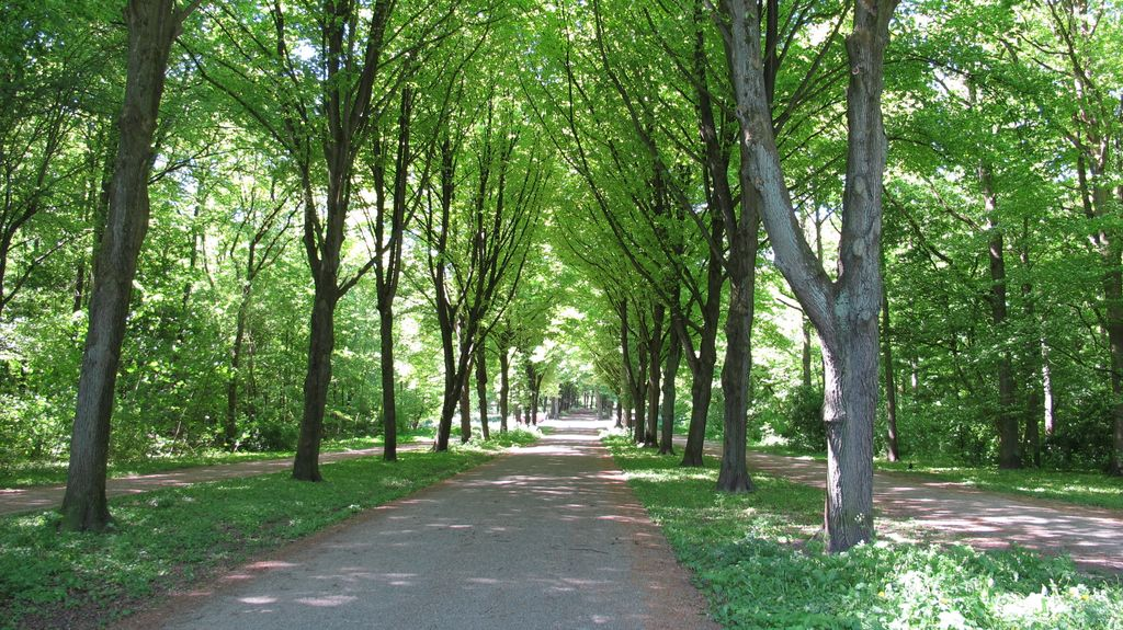 "Photo: Amsterdamse Bos (the ""Forest of Amsterdam"") on a"